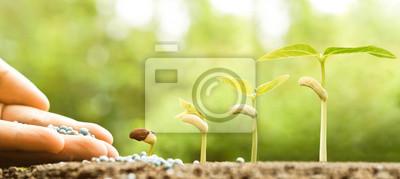 Fototapeta ręczne pielęgnowanie młodych niemowląt rośliny rosnące w sekwencji kiełkowania na żyznej gleby z naturalnym zielonym tle