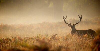 Fototapeta Red deer stag silhouette in the mist