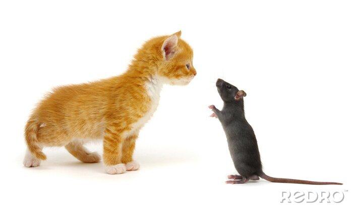 Fototapeta Red little cat and rat