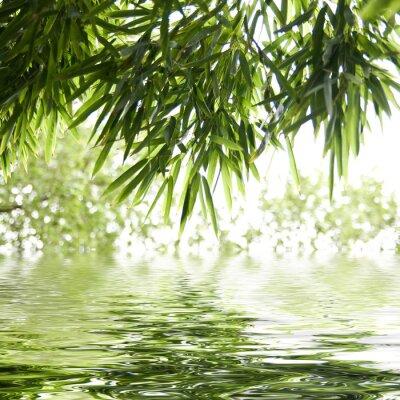 Fototapeta reflets de feuilles de bambous