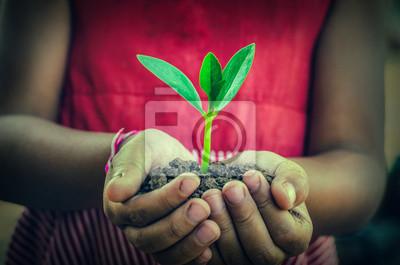 Ręka gospodarstwa młodych roślin zielonych