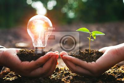 Fototapeta ręka trzyma żarówkę z małym drzewem. koncepcja energii energii w przyrodzie