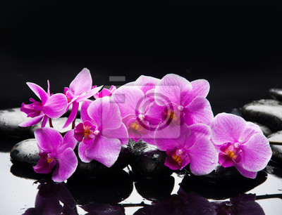 ró? owa orchidea oddziału na czarnych refleksji kamieni