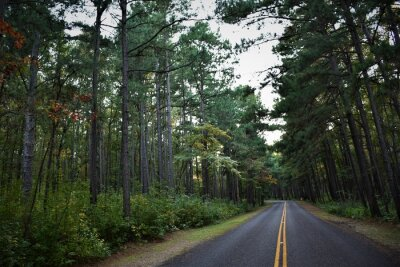 Fototapeta road through forest of pine trees in east texas in early morning
