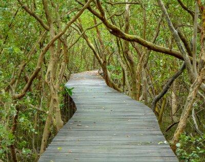 Fototapeta Road to Mangrove