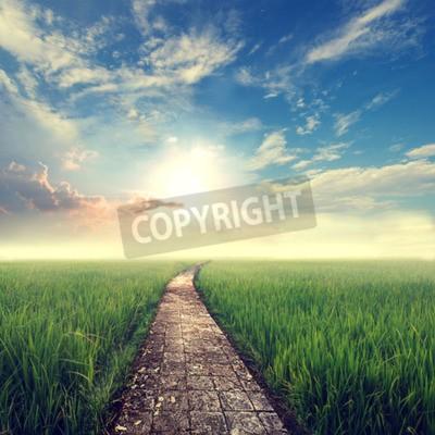 Fototapeta rocznika tło natura, trawa z nieba słońce