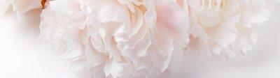 Fototapeta Romantic banner, delicate white peonies flowers close-up. Fragrant pink petals
