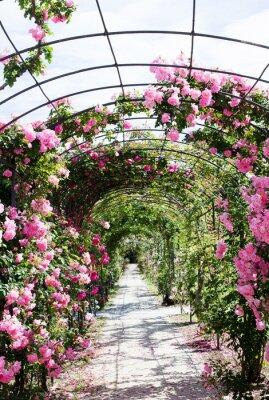 Fototapeta romantyczne ścieżki w bujny ogród różany