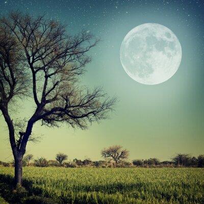 Fototapeta Romantyczny wieczór w świetle księżyca
