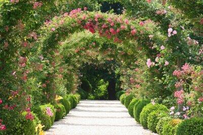 Fototapeta Roses Arch w ogrodzie
