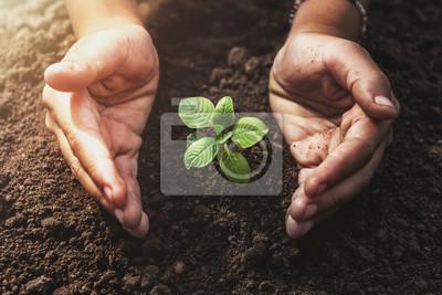 Fototapeta roślina rośnie z ochroną dłoni i słońcem w ogrodzie. koncepcja eko