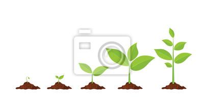 Fototapeta Rośliny faz rosną.