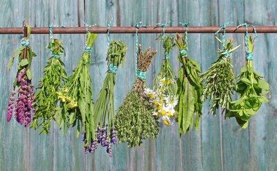 Fototapeta rośliny lecznicze