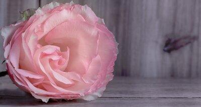 Fototapeta Róża, romantyczny, tło drewna