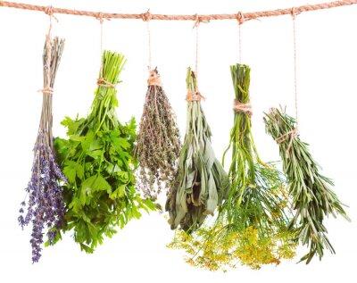 Fototapeta różne świeże zioła wiszące