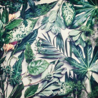 Fototapeta Różne tropikalnych liści dżungli z kroplami wody na różowym tle bladym, widok z góry