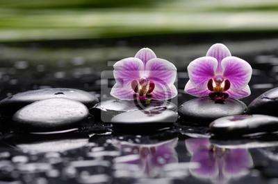 różowa gałąź orchidea na czarnych kamieniach z zieloną rośliną, odbicie