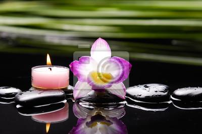 Różowa orchidea i zielony liść z kamieniami terapii