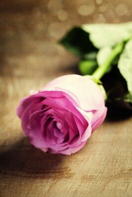 Fototapeta Różowa róża