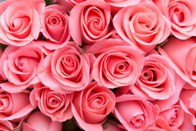 Fototapeta różowa róża bukiet kwiatów w tle