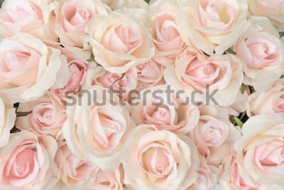 Fototapeta różowa róża na tła