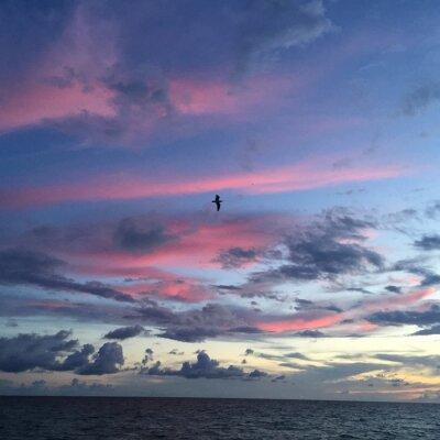 Fototapeta różowe chmury na zachodzie słońca