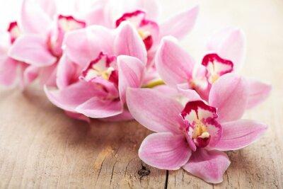 Fototapeta różowe kwiaty orchidei