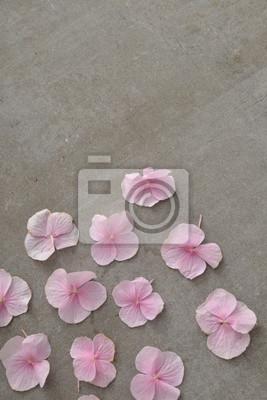 Różowe płatki hortensji na szarym tle