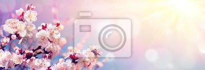 Fototapeta Różowi okwitnięcia Przeciw niebu Przy wschodem słońca - wiosny kwitnienie