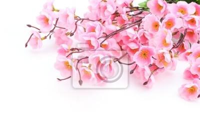 Różowy kwiat śliwy