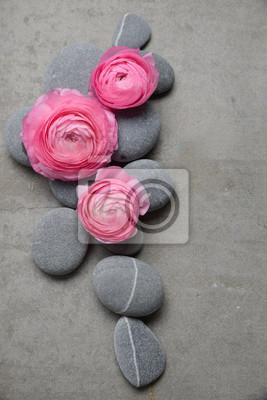 Różowy trzy Jaskier z szarego kamienia na szarym tle