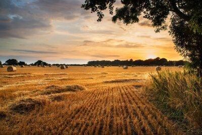 Fototapeta Rural landscape image of Summer sunset over field of hay bales