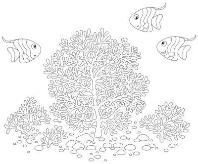 Fototapeta Ryby i korale