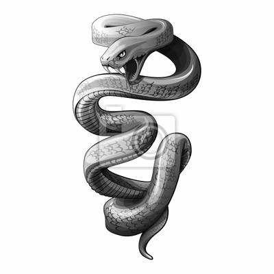 Fototapeta rysować wektor węża