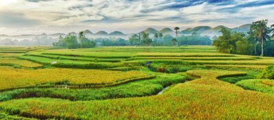 Fototapeta Ryż niełuskany, panorama