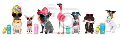 Fototapeta rząd psów na letnie wakacje