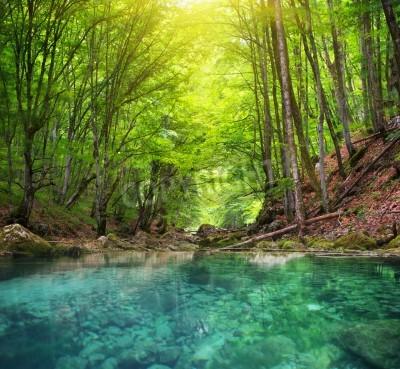 Fototapeta Rzeka głęboko w lasów górskich. Skład charakter.