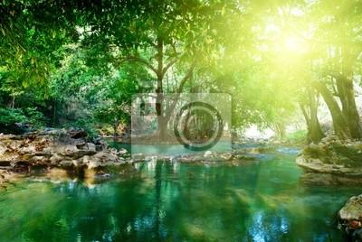 rzeka w głębokim lesie