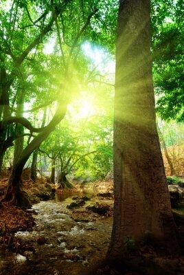 Fototapeta rzeka w głębokim lesie
