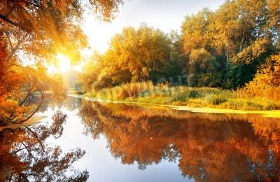 Fototapeta Rzeka w lesie jesienią w pięknym słoneczny dzień