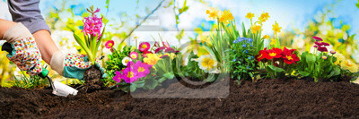 Fototapeta Sadzenie kwiatów w ogrodzie