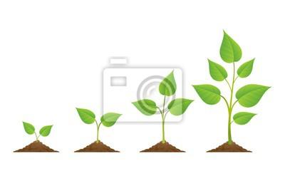 Fototapeta Sadzenie. Rośliny rją odosobnionego na białym tle lub zasadzają ziarno, dorośnięcie i hodowlaną wektorową ilustrację ,.