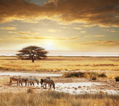 Fototapeta Safari 0