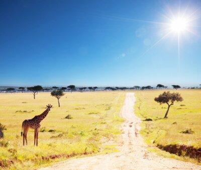 Fototapeta Safari 2