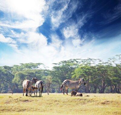 Fototapeta Safari 4