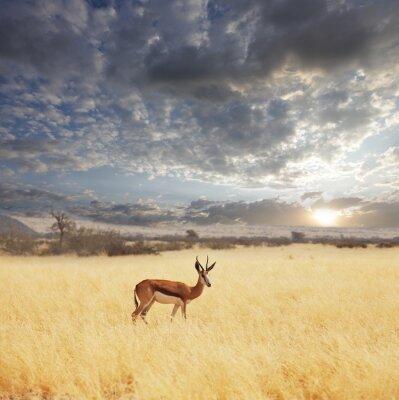 Fototapeta Safari 5