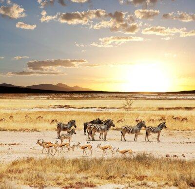 Fototapeta Safari 6
