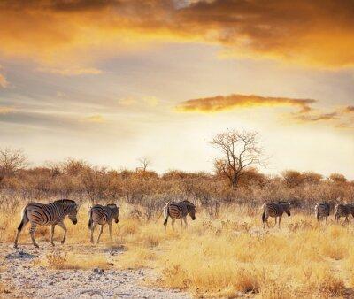 Fototapeta Safari 7
