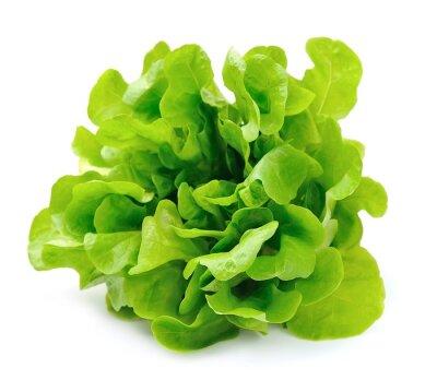 Fototapeta Sałatka samodzielnie na białym tle .Salad liście