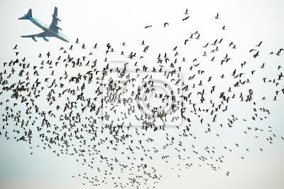 Samolot lecący nad kaczki pływające